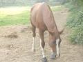 marca-di-rosa-i-cavalli-di-giulia-12