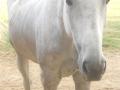 marca-di-rosa-i-cavalli-di-giulia-13