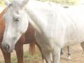 marca-di-rosa-i-cavalli-di-giulia-15