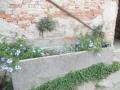 marca-di-rosa-il-vecchio-abbeveratoio-fiorito-8