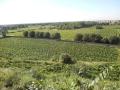 casa-orlando-vista-sulle-vigne-3