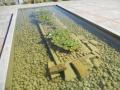 erbe-danzanti-giochi-d-acqua-7