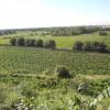 casa Orlando-Zingales - vista sulle vigne