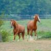villa Cantoni Marca Di Rosa - cavalli in libertà