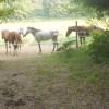 villa Cantoni Marca Di Rosa - i cavalli di Giulia