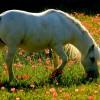 villa Cantoni Marca Di Rosa - il pony bianco