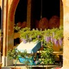 villa Cantoni Marca Di Rosa - il portico in fiore