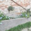 villa Cantoni Marca Di Rosa - Il vecchio abbeveratoio fiorito