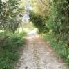 villa Cantoni Marca Di Rosa - il vialetto ai recinti
