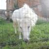 villa Cantoni Marca Di Rosa - pony