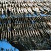 Montisola - sardine ad essiccare