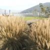 Giardino delle erbe danzanti - scorci di lago